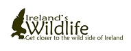 Top Zoo and Wildlife Blogs 2020 | Ireland's Wildlife